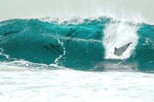delphine die aus dem blauen wasser springen